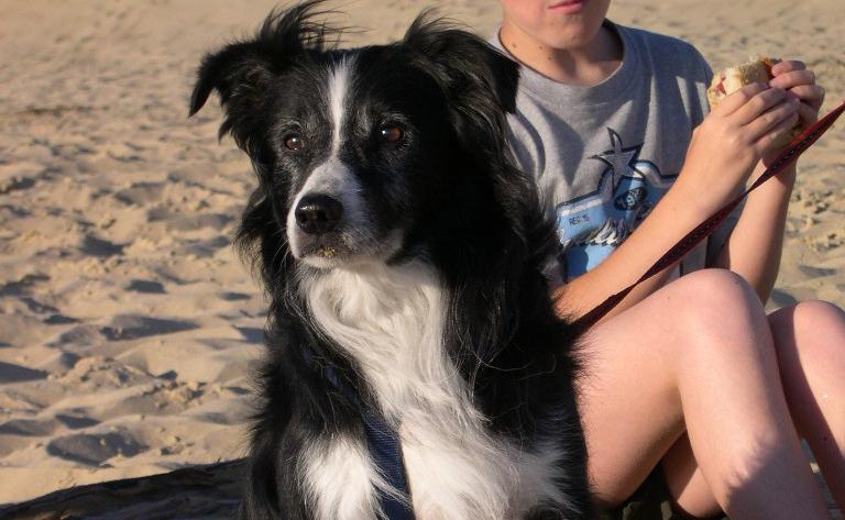 Témoignage d'Ulysse, chien âgé adopté